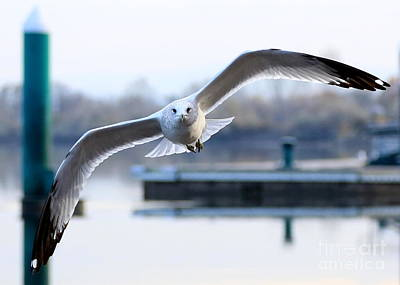 Seagull Over The Pier Poster by Carol Groenen