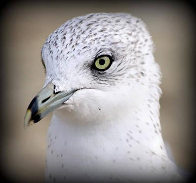 Seagull Portrait Poster by Aurelio Zucco