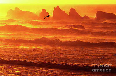 Poster featuring the photograph Seagull Soaring Over The Surf At Sunset Oregon Coast by Dave Welling
