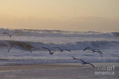 Seagull Sunrise Poster by Tannis  Baldwin