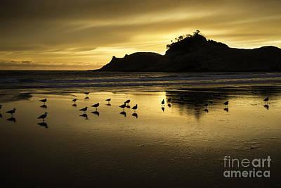 Seagull Sunset At Cape Kiwanda Poster