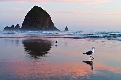 Seagulls And Haystack Rock Poster
