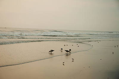 Seagulls And Sandpipers Poster by Bill Cannon