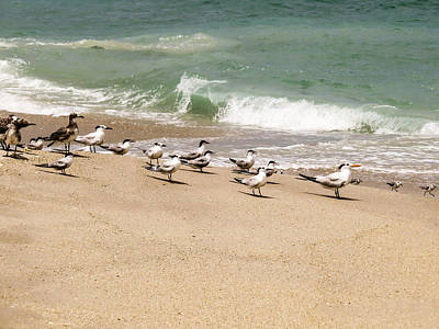 Seagulls And Sandpipers Poster by Zina Stromberg