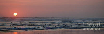 Seagulls At Sunset Poster by Chuck Flewelling