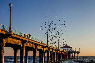 Seagulls At The Pier Poster
