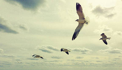 Seagulls In Flight Poster
