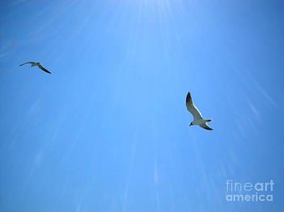Seagulls Soar Poster