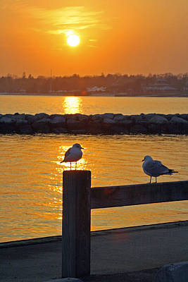 Seaguls At Sunset Poster