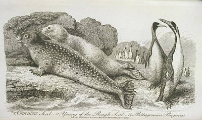 Seals And Penguins Poster by British Library