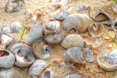 Poster featuring the photograph Seashell 01 by Donald Williams