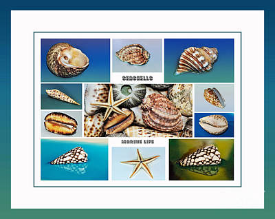 Seashell Collection 4 - Collage Poster