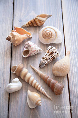 Seashell Collection Poster by Jan Bickerton