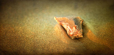 Poster featuring the photograph Seashell by Joye Ardyn Durham