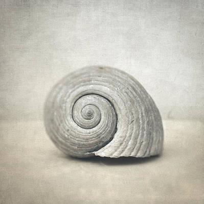 Seashell Poster by Taylan Apukovska