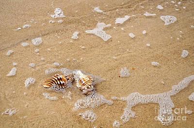 Seashells And Bubbles Poster