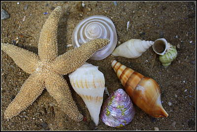Seashells And Star Fish Poster