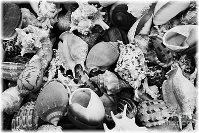 Seashells - Black And White Poster by Carol Groenen