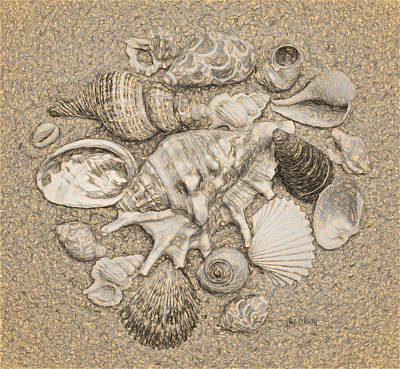 Seashells Collection Drawing Poster