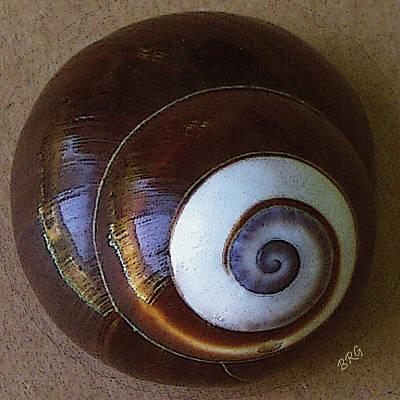 Seashells Spectacular No 26 Poster by Ben and Raisa Gertsberg
