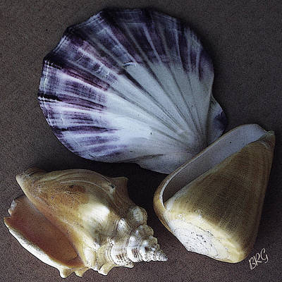 Poster featuring the photograph Seashells Spectacular No 30 by Ben and Raisa Gertsberg