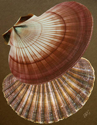 Poster featuring the photograph Seashells Spectacular No 53 by Ben and Raisa Gertsberg