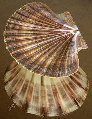 Poster featuring the photograph Seashells Spectacular No 54 by Ben and Raisa Gertsberg