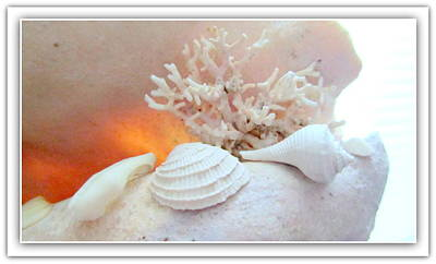 Seashells Study 3 Poster by Danielle  Parent