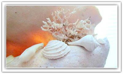 Seashells Study 3 Poster