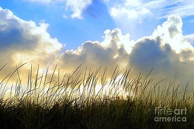 Seaside Grass And Clouds Poster