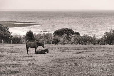 Seaside Horses Poster