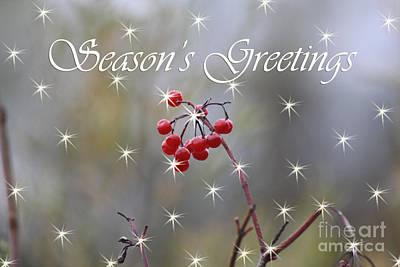Seasons Greetings Red Berries Poster