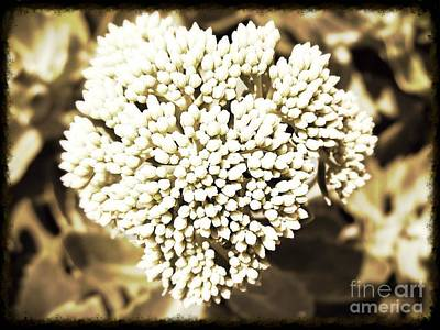 Sedum In The Heart Poster by Kimberlee Baxter