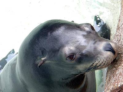 See Me Seal Poster