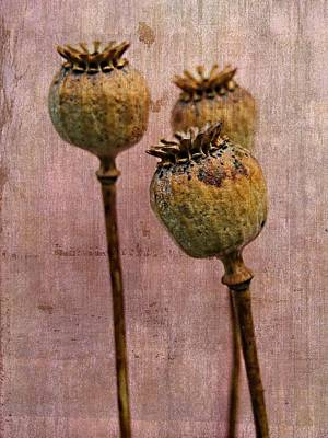 Seed Pods - An Artistic Display Poster