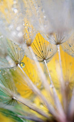 Seedhead With Raindrops Poster