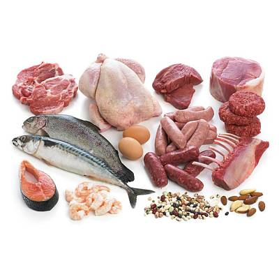 Selection Of Fish And Meats Poster
