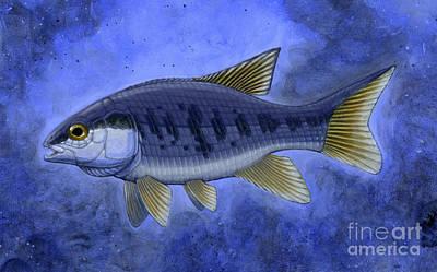 Semionotus Flag-back, An Extinct Genus Poster by H. Kyoht Luterman