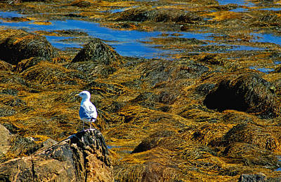 Poster featuring the photograph Sentinel Seagull by Nancy De Flon