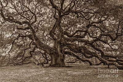Sepia Angel Oak Poster