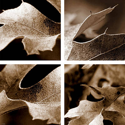 Sepia Leaf Collage Poster