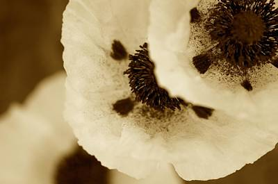 Sepia Poppies Poster