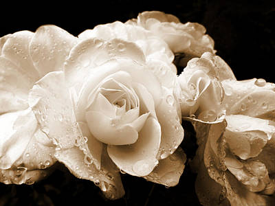 Sepia Roses With Rain Drops Poster by Jennie Marie Schell