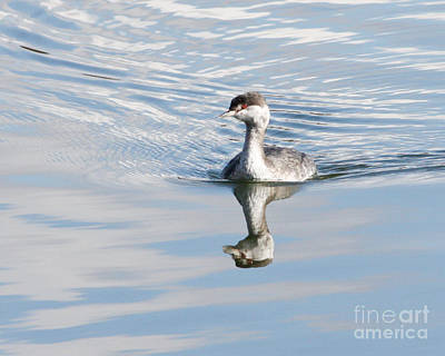 Poster featuring the photograph Serene Grebe by Anita Oakley