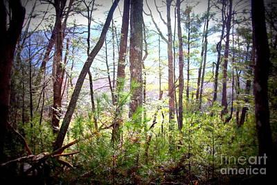 Serene Woodlands Poster
