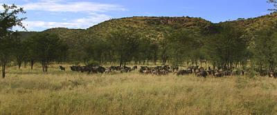 Serengeti Poster by Joseph G Holland