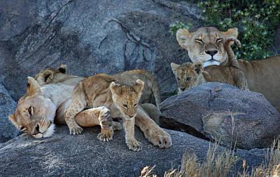 Serengeti Pride Poster by David Beebe