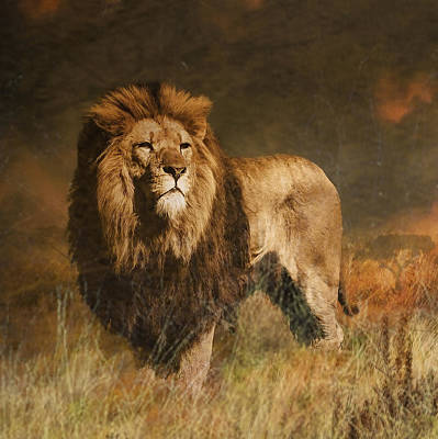 Poster featuring the photograph Serengeti Sunset by Brian Tarr