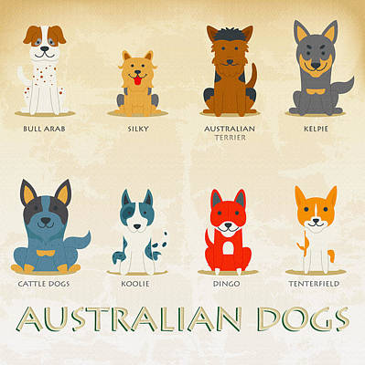 Set Of Australian Dogs Poster by Don Kuing