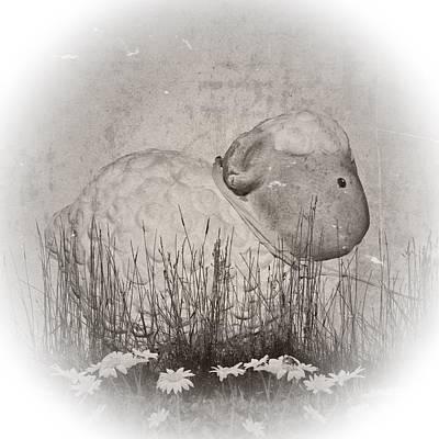 Shabby Sheep Poster by Sharon Lisa Clarke